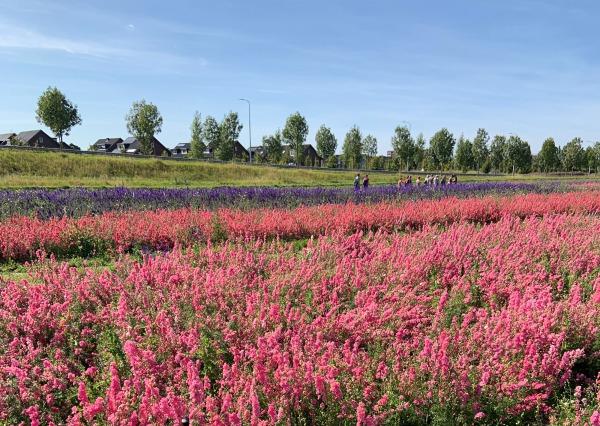 Uitgestrekte velden met bloemen op het nieuwe Landgoed Kleine Vennep